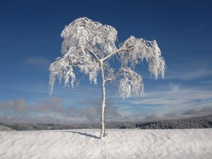 winter-1675197_960_720
