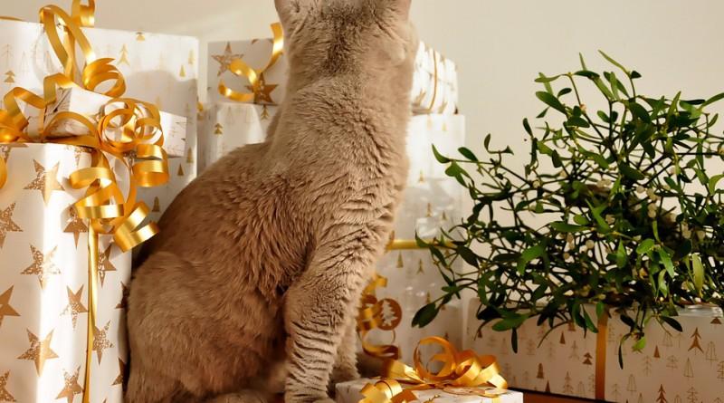 cat-1106803_960_720