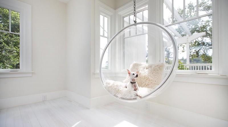 - A nappali és Zuzu a házi kedvenc, Copyright: Michael Clemens