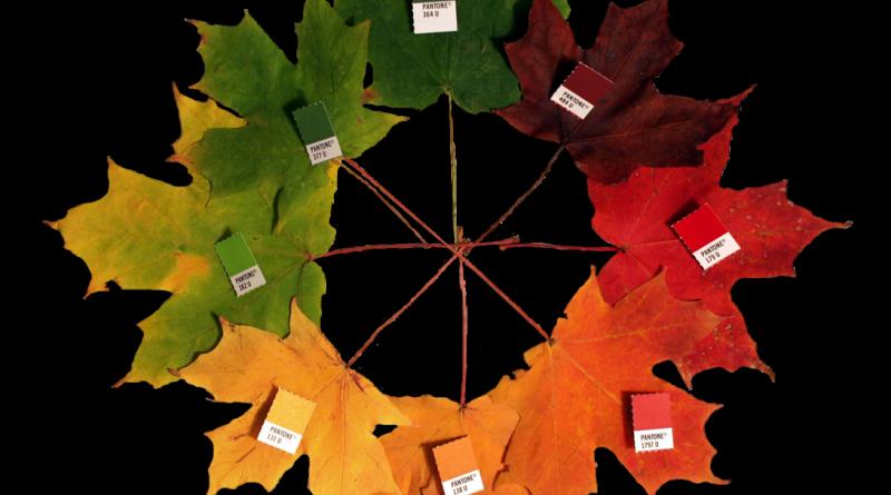 Az ősz színei - Pixabay